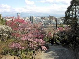 岡本公園(岡本梅林)